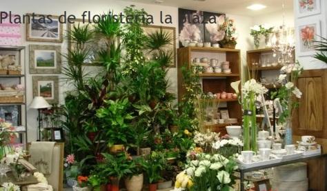 Plantas de Flores La Plaza. Cangas del Narcea